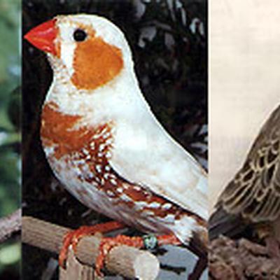 Vogelrijk – Alain Rogge - Sint-Kruis-Winkel - Vogels