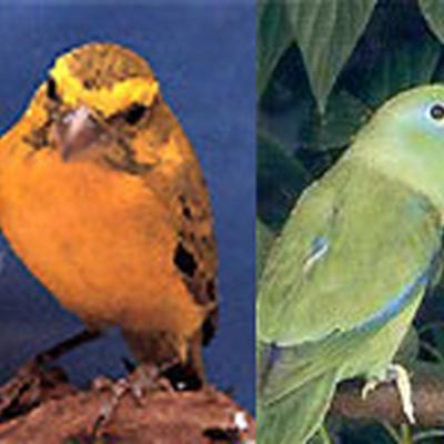 Vogelrijk - Vogels